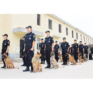 万全犬防业务